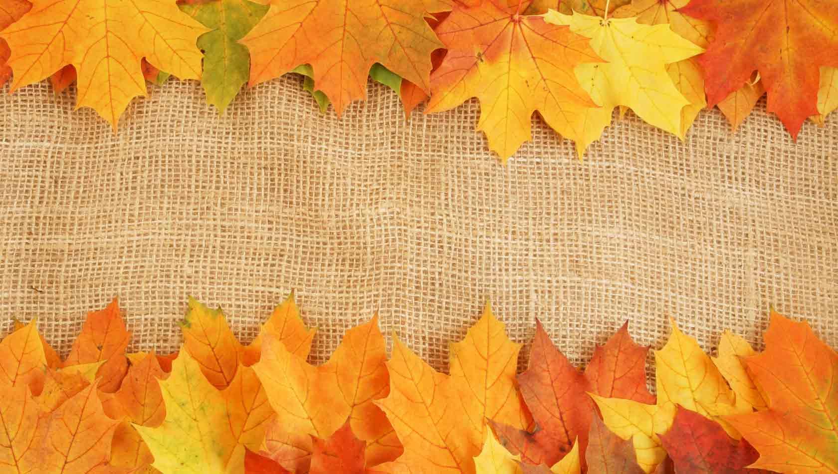 leaves_texture2393